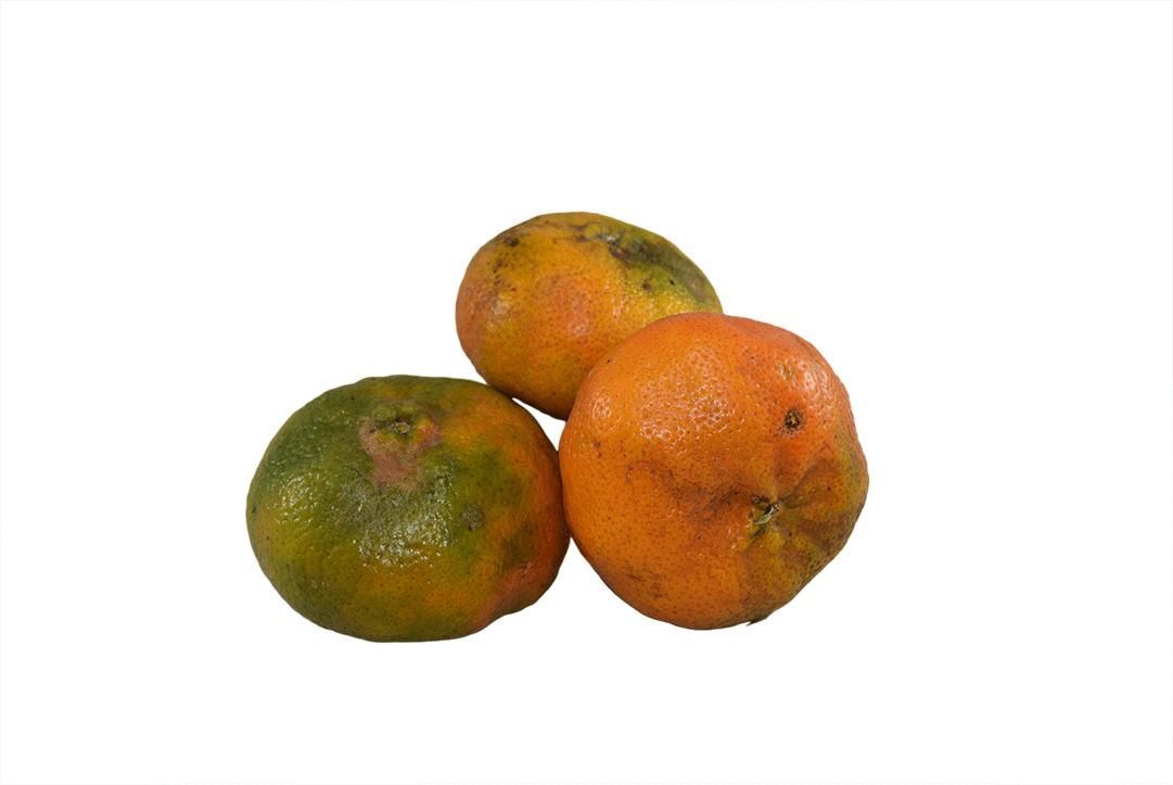Mandarina Kilo 1000 G