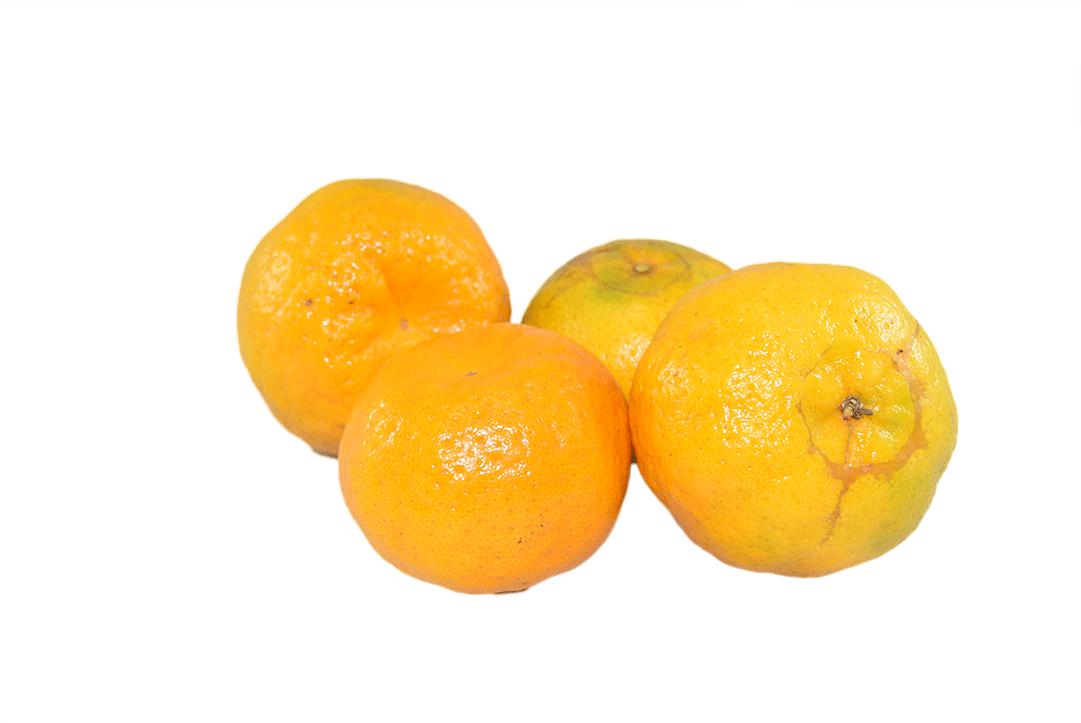 Mandarina Oneco Kilo 1000 G